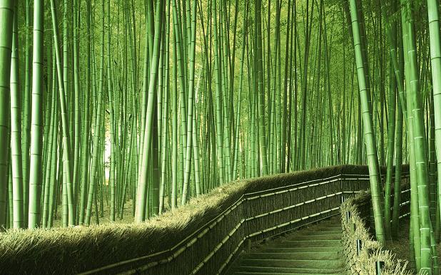 Coltivare Bamb Gigante In Italia.Il Bambu E I Benefici Per L Ecosistema Green News